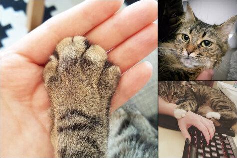 ЧУДОВИЩНО! 20 диких вещей, которые ты тайно делаешь со своим котиком