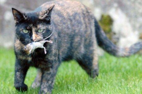 Съесть нельзя отпустить. Фото кошки и мышки с удивительно непредсказуемым финалом