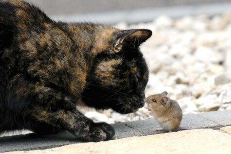 Ļoti netipiski kadri ar sirsnīgu kaķa un peles draudzību