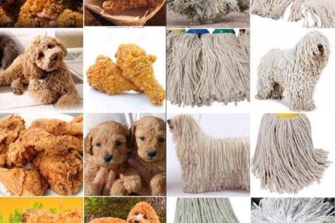 Различи! Лабрадор или жареная курица? Пастушья собака или швабра?