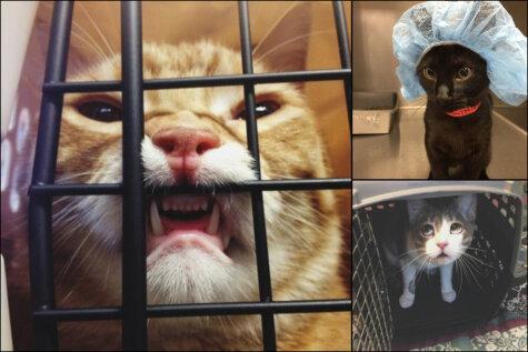 17 котиков, которых подло предали их же хозяева (возможно, даже ты)