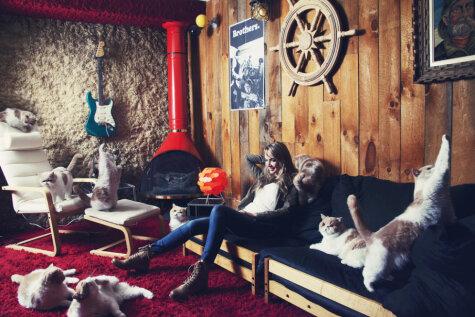 Desmit attēli, kuros dominē kaķi
