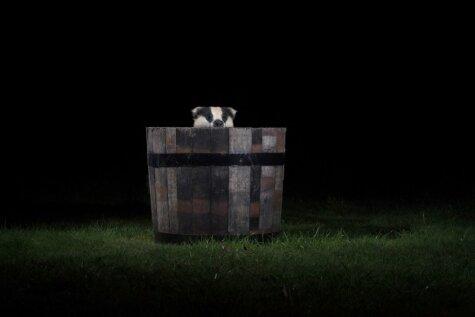 Fotogrāfs iemūžina zvērus, kas naktīs snaikstās pa pagalmu