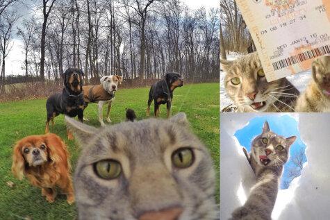 Кот, который делает селфи лучше, чем ты, стал интернет-сенсацией