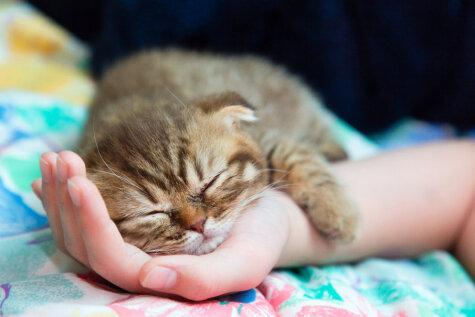 Самое распространенное домашнее животное в Латвии — кошка