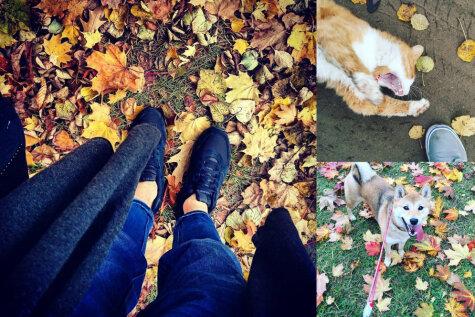 20 доказательств того, что это не осень наступила в Риге, а рижане наступили на осень
