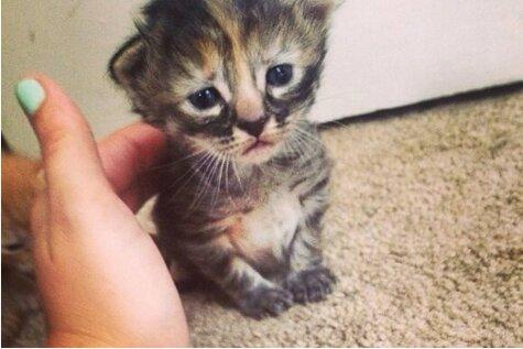 Psc - возможно, самый грустный в мире котенок :(