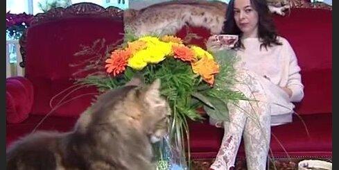 Gundegas Skudriņas kaķis - dāvana