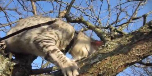 Kā glābt kaķi, ja tas uzskrējis kokā un netiek lejā?