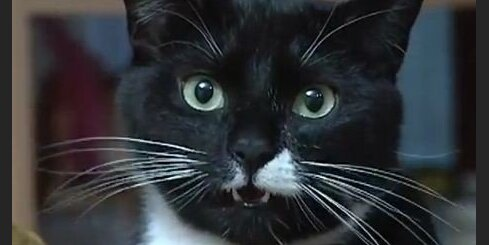 Raimondas Vazdikas kaķi - īsti aktieri