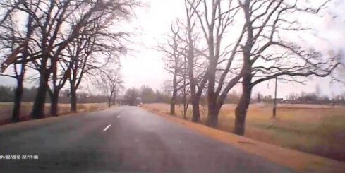 Autovadītājs izvairās no krītoša koka