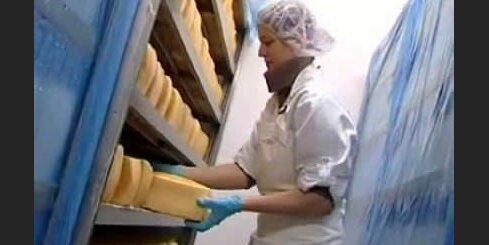 Latvijas siers - smaržo vai smird?