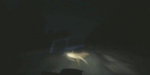 Autovadītājs brīnumainā kārtā izvairās no stirnas