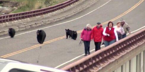 ASV lāču mazuļi dzenas pakaļ tūristiem