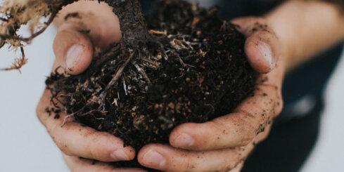 Antidepresantu mikrobi augsnē: kā rakņāšanās pa zemi dara tevi laimīgāku