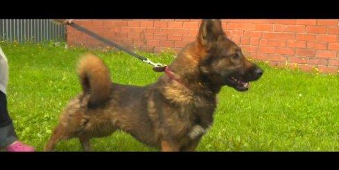 Pētījumi atklāj suņu kaklasiksnu kaitīgumu
