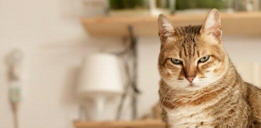 В России за 60 тысяч евро продают кота-экстрасенса