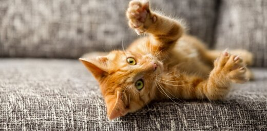 Ugunsdzēsēji Rīgā atbrīvojuši zem dušas iesprūdušu kaķi