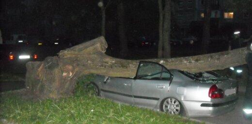 Zolitūdē mašīnai virsū uzgāžas koks