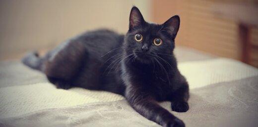 ВИДЕО: Кошки заранее почувствовали землетрясение и удивили интернет