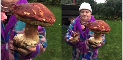 Foto: Apšuciema mežos uziet trīs kilogramus smagu baraviku