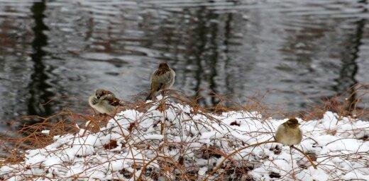 Начало декабря в Латвии оказалось теплее нормы