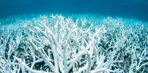 Ученые: Большой Барьерный риф белеет из-за потепления