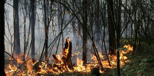 Svētdien reģistrēti pieci meža ugunsgrēki