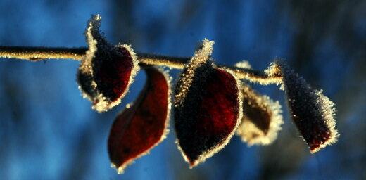 Naktī uz pirmdienu iespējami jauni aukstuma rekordi