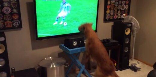 Video: Futbola fans, kurš no sirds jūt līdzi visām komandām