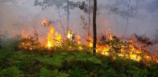 Sestdien dzēsts tikai viens meža ugunsgrēks