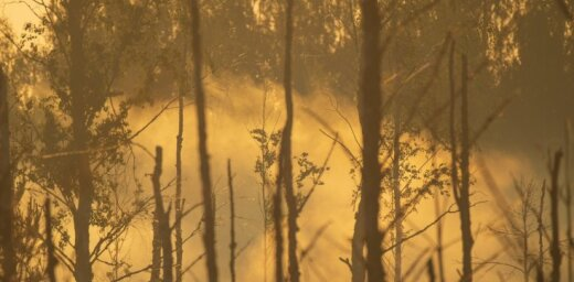 В пожаре на Адажском полигоне выгорело 770 га