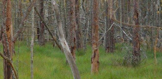 Otrdien dzēsti trīs nelieli meža ugunsgrēki
