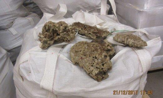 В Латвии таможенниками задержан рекордный груз: изъято более 14 тонн кораллов