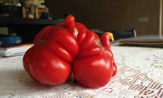 'Delfi Aculiecinieks' aicina dalīties ar neparastu dārzeņu foto
