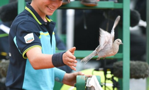 Ballboy waves a pigeon, tennis