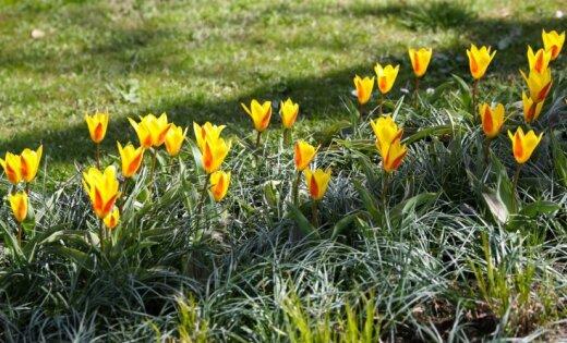 Во вторник ожидается солнечный день с прохладным ветром