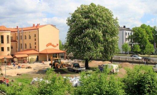 Foto: Aculiecinieku satrauc koku izciršana Jelgavā
