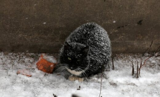 Фенолог: Зима еще укусит не на шутку, весна придет лишь на Пасху