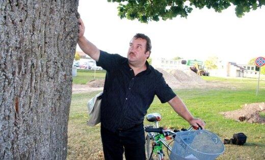 Salaspils Botāniskā dārza direktors gatavs pieķēdēties pie nociršanai paredzēta simtgadīga ozola