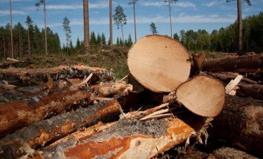 RAKSTIET: Ja izcirtīs mežus, mēs nomirsim badā