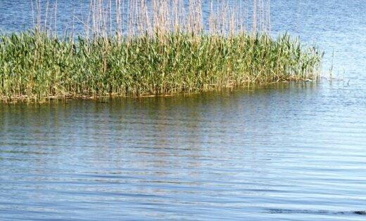 Spiciera ezerā iet bojā zivis