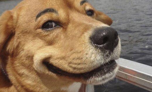Jauns modes kliedziens - suņi ar uzacīm