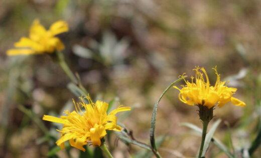 Природа удивляет! Необычные осенние фото, снятые в Вакарбулли