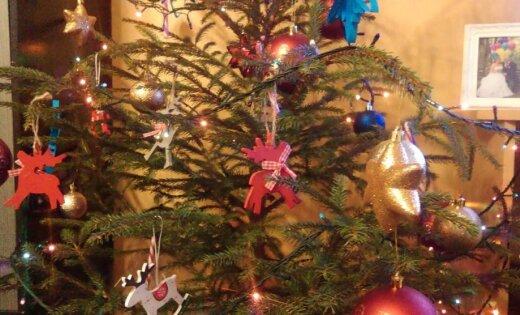 No meža vai pirkta un dekorēta: kāda ir tava Ziemassvētku egle?