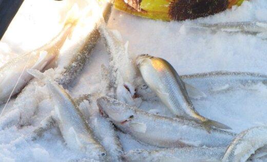 Фоторепортаж: Пошла корюшка на радость рыбакам!