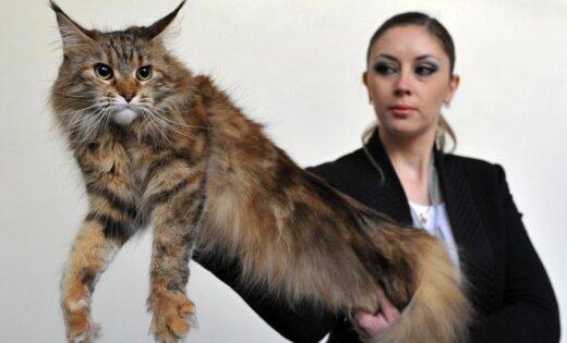 Pie kirgīziem pulcējas paši stilīgākie kaķi