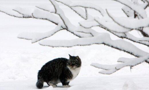 Sniega segas biezums Kurzemē sarucis līdz četriem, Alūksnē - līdz 51 centimetram