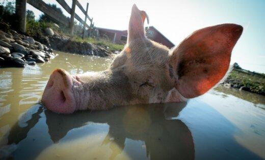 Sandris Ādminis: 4. oktobris – Dzīvnieku aizsardzības diena. Ko tā nozīmē 21. gadsimtā?