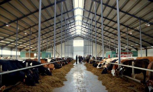 Kalna pagastā darbu sākusi viena no vērienīgākajām govju fermām valstī